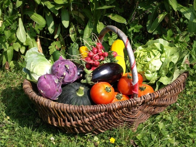 panier de légumes maricher cacheterie fleury la foret